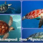 Всемирный день черепахи