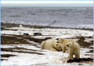 Нефть на Аляске